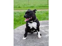Dog walker/Pet sitter Walsall area