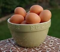 Pasture raised farm eggs