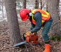"""STANDING TIMBER WANTED """"EARN $$$$$ FROM YOUR WOODLOT"""""""