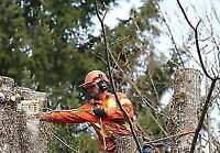 647-704-0175. Anytime tree removal quick fast safe Insured.