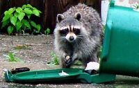 Garbage pick up removal raccoons and pest getting in your bins