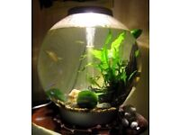 105 litre biorb fish tank with fish