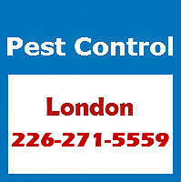 Pest Control London - Affordable and Reliable - 226-271-5559