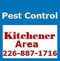 Pest Control Kitchener & Area Affordable & Reliable-226-887-1716