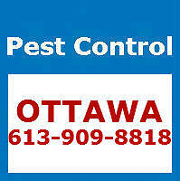 Pest Control Ottawa - Affordable and Reliable - 613-909-8818