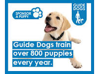 Guide Dogs For The Blind - Door to Door Senior Team Leader - Newcastle (£10-£12)