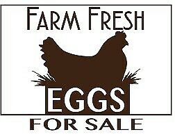 Free range farm fresh eggs for sale. 3.00$ dozen