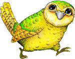 The_Flying_Kakapo