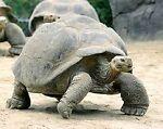 Tortoise Trading