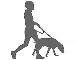 Top Dogs, Dog Walking Service (EAST-END GLASGOW)