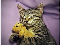 WANTED - Soft Toys for Cat Charity!!!!!!
