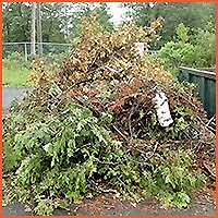 JUNK REMOVAL,BRANCHES,SHRUBS & SOD REMOVAL SAME DAY SERVICE