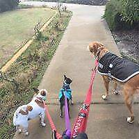 Perth Petaholics - Dog Walking and Pet Services