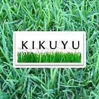 KIKUYU EUREKA GREEN ALL YEAR ROUND ! FAST GROWING ! CERTIFICATE ! Richmond Hawkesbury Area Preview