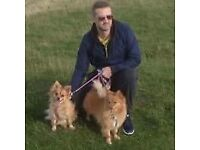 Dog walking & Dog sitting for Banbury dog owners(pre 8am,after 6pm,w/end £7.50 per hr/£5 half hr)