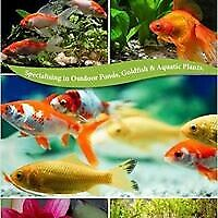 Gold Fish ,Tropical fish and Aquarium accessories
