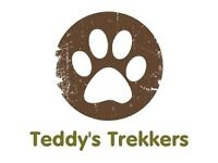Teddy's Trekkers Dog Walking and Pet Sitting service covering Illogan and surrounding areas