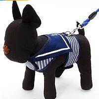 Harnais et chandails pour chien