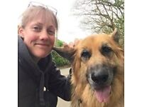 Fully Insured, Experienced & Professional Pet Care available for ALL animals. North Cornwall