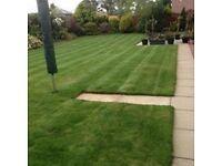 Gardener Dundee Excellent Service