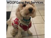 Dog walking & Pet boarding / sitting service