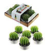 Mini cactus tealight candles pack of 6