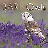 Barn-Owls-M-BOOK-NEU