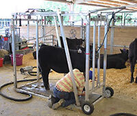 Cattle Grooming Equipment
