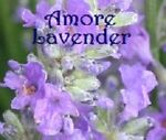 Amore Lavender Farms