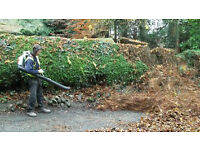 South London Garden Maintenace and Garden Clearance,Landscaping Service