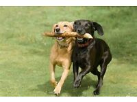 Professional and insured dog walker / trainer, qualified, reliable, dog walking is our passion.