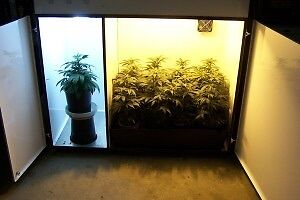 BCNL BLOOMBOX ***THE BEST GROW BOX ON THE MARKET!! ***