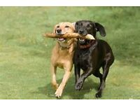 Professional and insured dog walking and dog training services in Lightwater and surrounding areas.