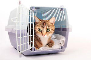 Cage carrier cat chat dog chien