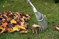 *** Fall Clean-up & Snow removal ***