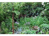 RHS Qualified Garden Designer & Plantswoman