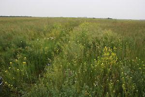 Saskatchewan - Hayland and Grain