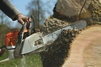 Cutting tree removal best price. Call us.