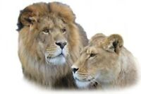 2 single admissions to Jungle Cat World, Orono (Oshawa/Peterbor)