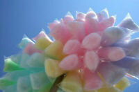 COTTON CANDY, CANDY APPLES, FUDGE, POPCORN & more...