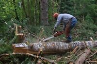 Snow removal  ,Tree removal and Chainsaw repairs call Jim