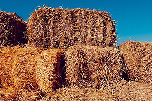 HAY - Very Large Square Bales 3x3x7'