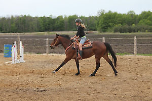 10 year old Well-Trained Mare London Ontario image 1