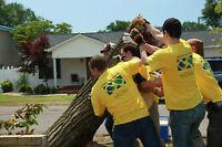 FREE Volunteer Work!!!