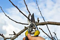 WE REMOVE UNWANTED SHRUBS AND TREES.