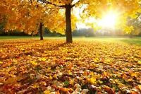 Outdoor Fall Maintenance & Clean-up Year Round & Seasonal Homes