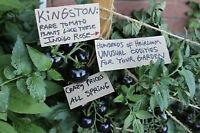 Heirloom PLANTS - TOMATO - Pepper - Vegetable - $1