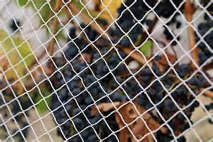 Commercial grade bird netting. $6.50 per meter, 10 meters wide Magill Campbelltown Area Preview