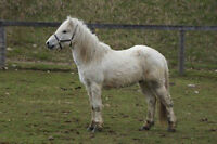 Horses For Sale from Conestogo River Horseback Adventures