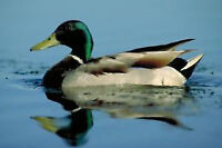 Volunteer with Ducks Unlimited Canada in Fredericton!